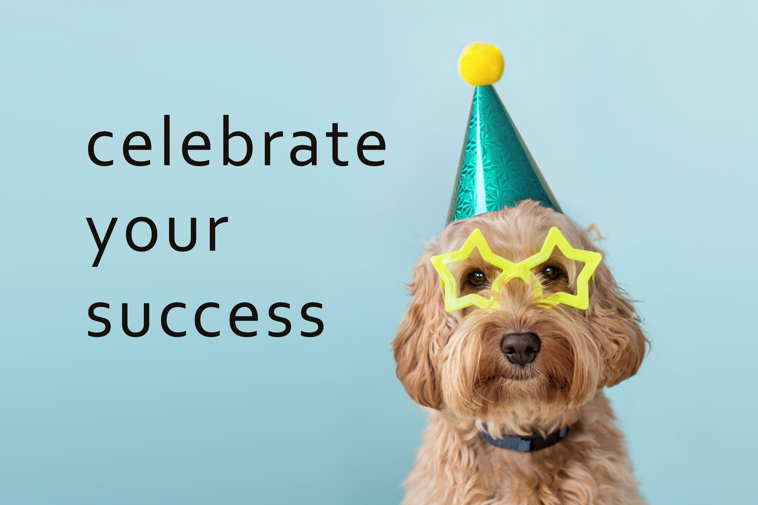 celebrate your success dog with hat